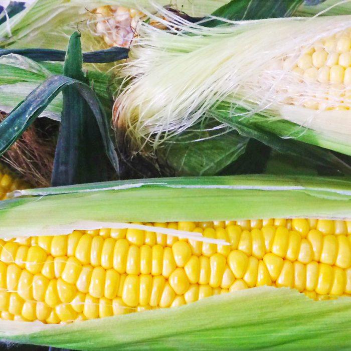 Ефективне підживлення кукурудзи за нестабільних погодних умов